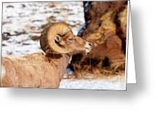 Ram Drool Greeting Card