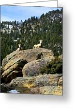 Ram On The Watch Greeting Card