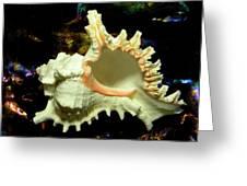 Rams Horn Seashell Greeting Card