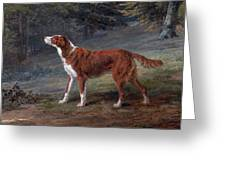 Ranger A Setter The Property Of Elizabeth Gray Greeting Card