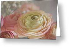 Ranunculus - 6243 Greeting Card