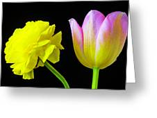 Ranunculus And Tulip Greeting Card