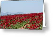 Ranunculus Red Greeting Card