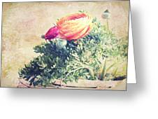 Ranunculus Stilllife Greeting Card