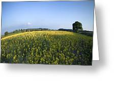 Rapeseed Blossom Greeting Card