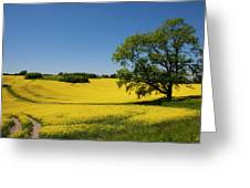 Rapeseed Field,west Sussex, England  Greeting Card
