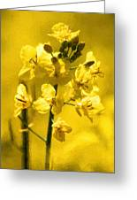 Rapeseed Greeting Card