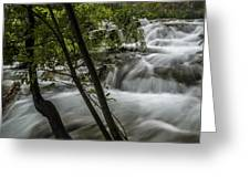 Rapids In Forest  Greeting Card
