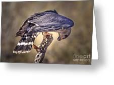 Raptor 21 Greeting Card