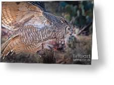 Raptor 28 Greeting Card