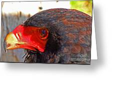 Raptor Head Greeting Card