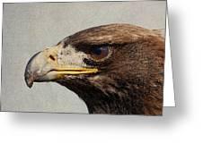 Raptor Wild Bird Of Prey Portrait Closeup Greeting Card