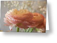 Ranunculus - 6315 Greeting Card