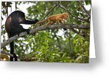 Rare Golden Monkey Greeting Card