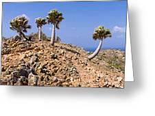 Rare Palm Tress Curacao Greeting Card