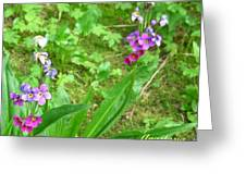 Rare Parry Primrose Spring Inlet Trampas Lake Nm Greeting Card