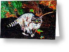 Rascally Raccoon Greeting Card by Will Borden