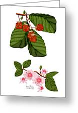 Raspberries And Raspberry Blossoms Greeting Card
