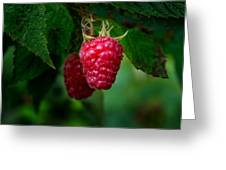 Raspberry 1 Greeting Card