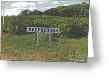 Raspberry Fields Three Greeting Card