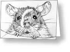 Rat Sketch Greeting Card