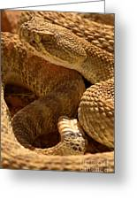 Rattlesnake And Rattle Greeting Card
