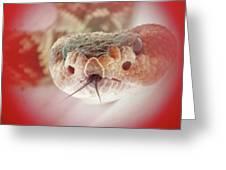 Rattlesnake Red Greeting Card