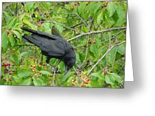 Raven In The Cherry Tree Greeting Card