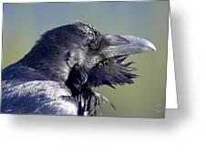 A Raven - Windblown Greeting Card