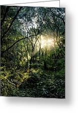 Ray Of Light Through Green Greeting Card
