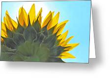 Ray Of Sunflower Greeting Card