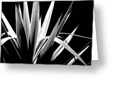 Razor Sharp Greeting Card
