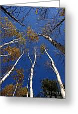 Reach For The Sky Greeting Card by Steve Augustin