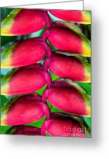 Parrot's Beak Heliconia Greeting Card