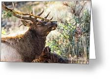 Ready For Rut Greeting Card