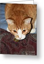 Ready To Pounce Greeting Card