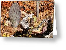 Real Cactus In An Actual Desert  Greeting Card
