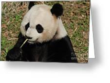 Really Cute Giant Panda Bear With Bamboo Greeting Card
