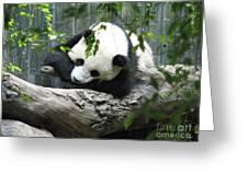 Really Cute Panda Bear Sleeping On A Log Greeting Card