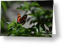 Really Elegant Oak Tiger Butterfly In Nature Greeting Card
