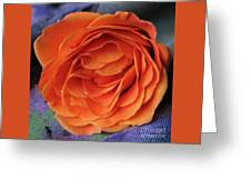 Really Orange Rose Greeting Card