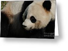 Really Up Close With The Face Of A Giant Panda Greeting Card