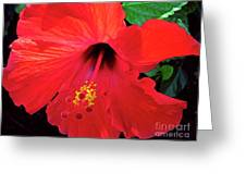 Reb Hibiscus Flower Greeting Card