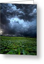 Reclusive Greeting Card by Phil Koch