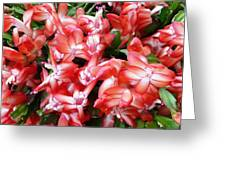 Red Abundance Greeting Card