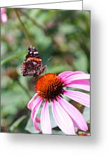 Red Admiral 1543 Greeting Card