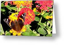 Red Admiral Butterfly Greeting Card