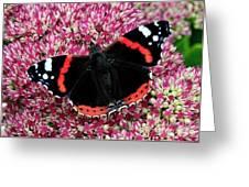 Red Admiral Butterfly Vanesa Atalanta Greeting Card