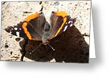 Red Admiral Close Greeting Card