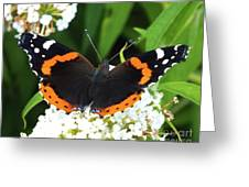 Red Admiral - Topwings Greeting Card